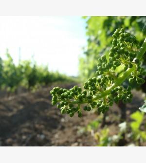 wijn in vaten - wijndomein 5